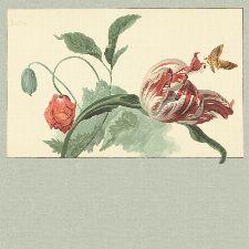 Bild: Eijffinger Fototapete Masterpiece 358119 - Tulip and Poppy (Grün)