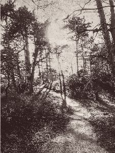 Bild: Eijffinger Fototapete Lino 379100 - Into the Woods