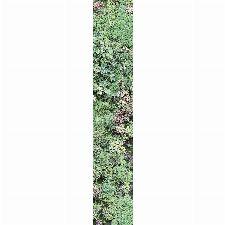 Bild: Accent - ACE67187007 - Duplex Panel: Vertical Garden