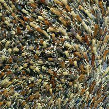 Bild: Teppich Spring - Braun