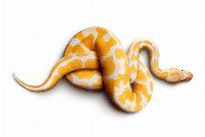 Bild: AP Digital - Snake - 150g Vlies (4 x 2.67 m)